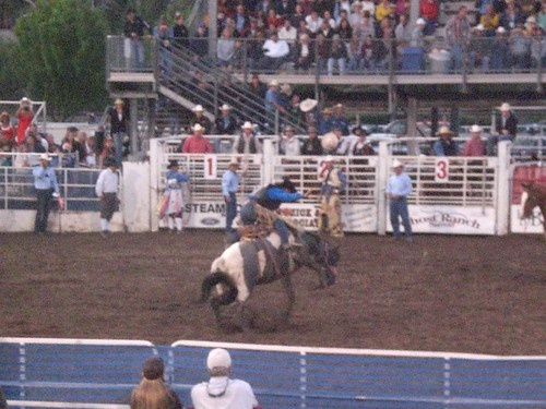 An evening at the Rodeo - Bronco Riding