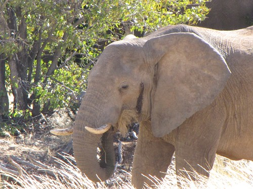 Damaraland: Elephants