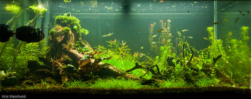 50G - Replanted