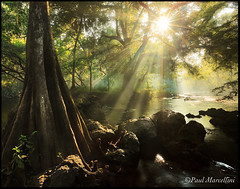 Holy Sunstar (Paul Marcellini) Tags: tampa oak cypress lightbeams lightrays sunstar hillsboroughriver paulmarcellini alemdagqualityonlyclub canon5dmk2 canon5dmarkii canon5d2 canon1635mmii