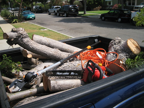 truck bed full of Jacaranda limbs