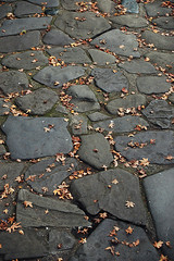 Stone Path and Leaves