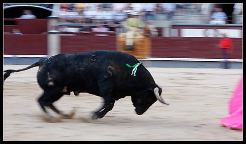 Toro de María del Carmen Camacho