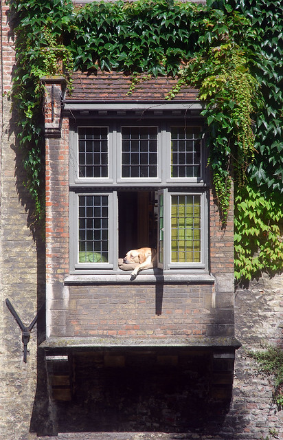 Even dogs have a daily siesta.... Brugge