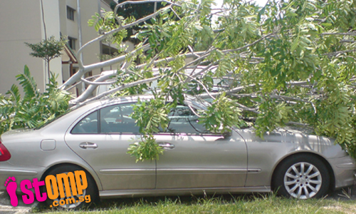 Uprooted tree falls onto Merc at Tampines