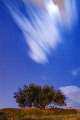 The Moon Hides (66 Seconds) (DavidFrutos) Tags: longexposure blue moon tree azul night clouds noche nightshot sony sigma paisaje luna explore murcia nubes estrellas rbol nocturna alpha 1020mm 700 olivo sigma1020mm largaexposicin sonydslr davidfrutos 700