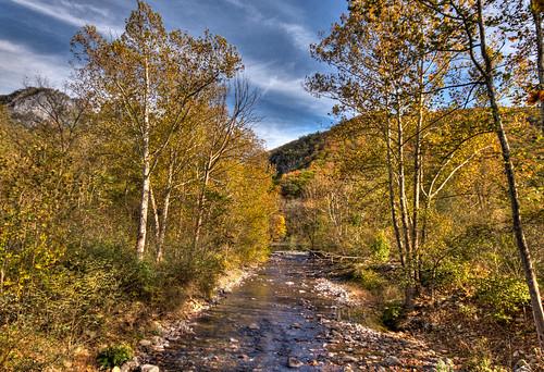The Stream at Seneca Rocks