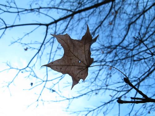 Last Leaf 2