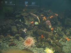 IMG_1731 (Joao Galdino) Tags: fish san francisco acquarium