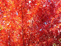 Fall Colors Boulder   DSCN0273
