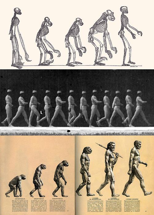 evolution_image