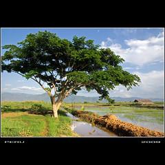 Arbol (Peru Serra) Tags: lago nubes reflejo rbol campo tamron1750 pentaxk10d