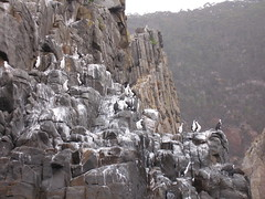 Birds on rocks (Joybelle007) Tags: birds rocks tasmanpeninsular