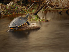 _BCL6312 (BcLand) Tags: longexposure water turtle shell driftwood swamp d200 nikkor tc17eii 70200mm28vr 17xtc