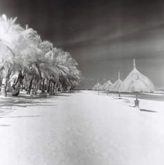 beach shades and coconut trees (darkcanopy) Tags: travel trees blackandwhite bw mamiya film tourism beach analog ir mono blackwhite tour noiretblanc philippines infrared bohol maco 28 analogue ph expired  mamiyac3 analogphotography f28 coconuttrees panglao hoya twinlensreflex c3  80mm normallens r72 filmphotography hoyar72 macophot mamiyasekor macoir820c 80mmf28 mamiyatlr 80mm28 macophotir820c ir820c beachshades mamiyac380mmf28
