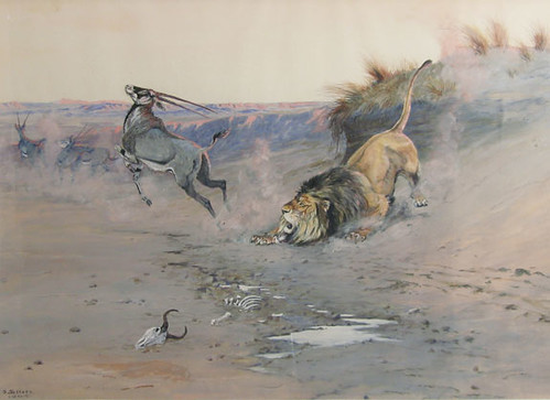 Lion Attacking Gazelle