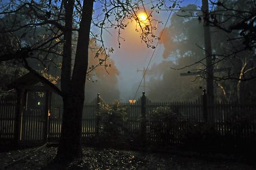 166-365 Misty morning
