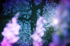 Backlit Tree with Pink Flowers (James Tebbutt) Tags: flowers blue sun blur tree silhouette closeup purple 1991 backlit expiredfilm smean8m