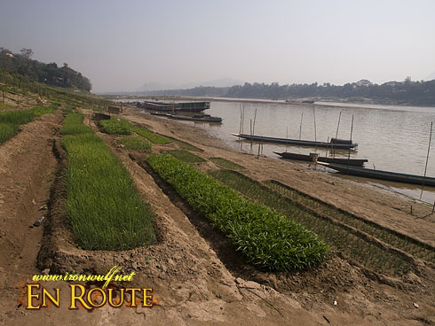 Ban Xieng Maen Mekong River bank Farms