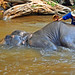 Maesa Elephant Camp_1