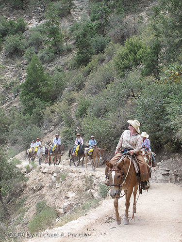 Mule Train on Bright Angel Trail