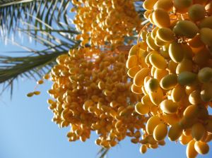 Golden Dates