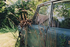 Corn and Car (Ludovic Macioszczyk Photography) Tags: corn car vintage nature blé plant sun summer light canon ae1 135 fuji 1600 iso france ludovic macioszczyk analog photography film pellicule no flash fd 50mm 18 camera photo photographie argentique keep alive ludos photographs dof 2009 35mm natural spring life shoot art limousin 87 holidays holiday house vacances châteauneuflaforêt colors color coutryside sunny bokeh picture world photographe m exposure négatif développement scan 1 2 3 4 5 6 7 8 9 appareil © tag