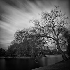 Untitled (Fahad Nasir -I'm Back- :D) Tags: bw cloud lake tree nikon australia perth slowshutter gitzo hoya 1735mm nd400 d700