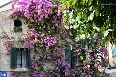 Sirmione (Matteo Bimonte) Tags: flowers fiori brescia sirmione