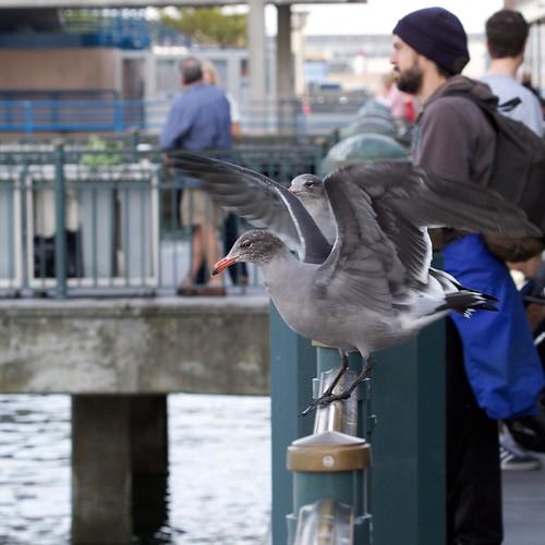Birds Of The Embarcadero