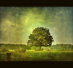 Under the Tree of Life (h.koppdelaney) Tags: life tree art digital photoshop self drive energy sheep symbol miracle magic philosophy creation mind dreamland symbolism psychology prana archetype kundalini copulation libido hourofthesoul