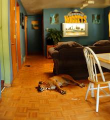 New Camera!!!! (Chad Galloway Photo) Tags: camera dog house dogs tv dof bokeh sony picture outoffocus depthoffield fullframe a850 bokehrama bokerama brenizermethod chadgalloway