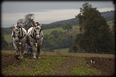 Perpetual Motion (strussler) Tags: show autumn england horses museum canon eos countryside westsussex terrier jackrussell heavy percheron ploughing singleton wealdanddownland ef100400l 5dmkii