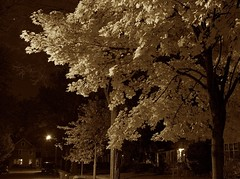 ghost tree (Spencer in Ann Arbor) Tags: tree sepia night michigan annarbor week43 52of2009 5212of2009