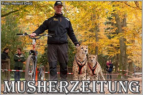 Uwe Radant mit seinen Geparden