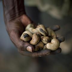 Cashew nuts in hand - India (Eric Lafforgue) Tags: india hand main explore indie indi indien hind indi inde hodu noix indland  hindistan indija   ndia hindustan    fivestarsgallery hindia cajou infinestyle  bhrat  indhiya bhratavarsha bhratadesha bharatadeshamu bhrrowtbaurshow  hndkastan       a0702633