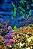 Subacquea. ((Vakis) Varnavas Varnava) Tags: pink blue light sea detail green water reflections coast leaf flora underwater waterfront cyprus reef paphos d300 waveshape ysplix theunforgettablepictures nikond300 elysiumhotel underwaterflora cyprusseascape varnavasthearchitect