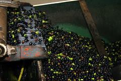 olives secouées