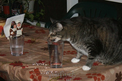 Wonder cat having a drink