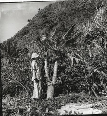 Anne Archbold beside cycad on El Templo Island