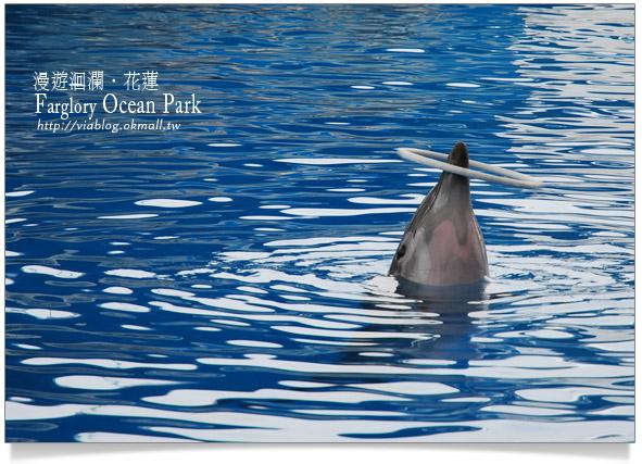 花蓮海洋公園一日遊40