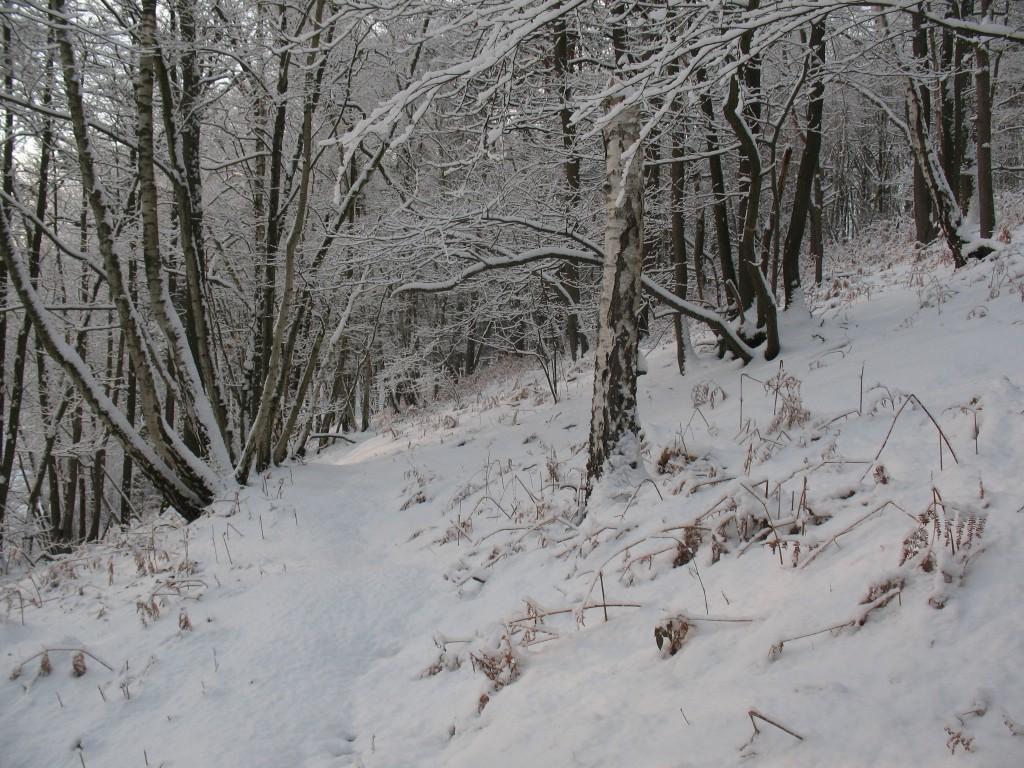 [White spirit] Vive la neige 78 4194837671_790ec062fe_o