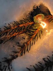 12/19/09 snow on Xmas tree - HMM! (karma (Karen)) Tags: christmas winter decorations home lights snowstorm maryland baltimore macros hmm macromondays seenonflickr