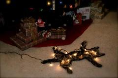 fried pussycat myi2u tags christmas vacation cats pets holiday tree art cat
