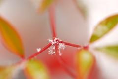 *fiocchi di neve* (texaskim81 **busy**) Tags: autumn snow macro ice nikon colours natura neve flakes autunno colori dicembre 2009 ghiaccio 105mm fiocchi d80