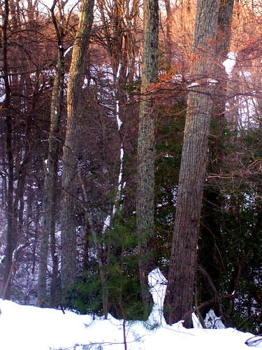 Looking into the woods on a snowy morning