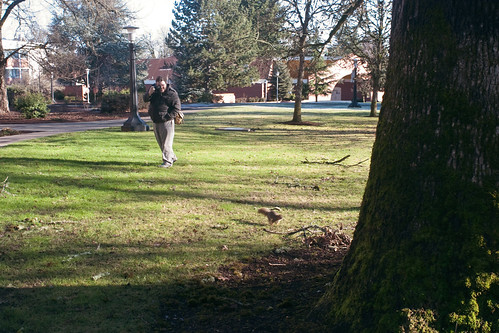 Chase harasses squirrel