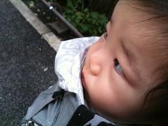 朝散歩とらちゃん(6/18)