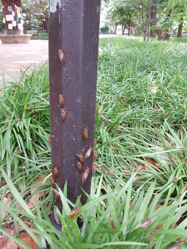 Cicada Lightpole