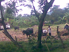 Oct 29 08031 (jimdmil) Tags: composting in maugbi
